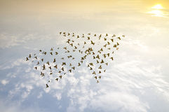 Birds on sky , growth development concept. Crowd of birds flying on sky , growth development success business concept , nature art abstract background stock photos