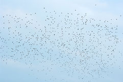 Birds in the sky. Royalty Free Stock Photography