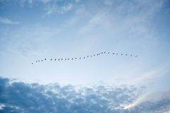 Birds in the sky Stock Photos