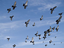 Birds in the Sky - Peace to the World   Royalty Free Stock Photography