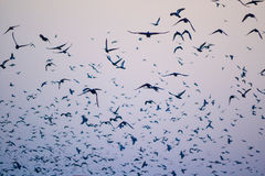 Birds, a sky silhouette Royalty Free Stock Photos