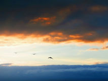 Birds on sky Stock Photography