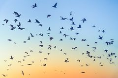 Birds in the sky during sunset royalty free stock photo