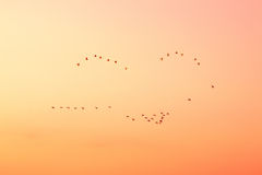Birds in the sky on sunset. Stock Photos