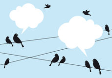 Birds in the sky, vector background Royalty Free Stock Image