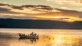 Pelicans on a small boat during beautiful sunset Royalty Free Stock Images