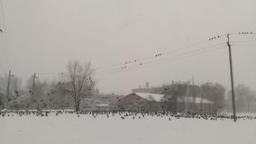 Birds on the snow Royalty Free Stock Images