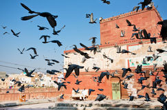 Birds soars into the sky against a background of the ancient buildings Royalty Free Stock Photos