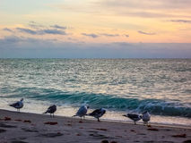 Birds Socializing on a Beach. In Florida stock images