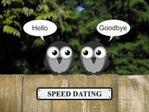 Birds Speed dating Stock Photo
