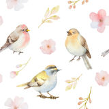 Birds and spring flowers watercolor seamless pattern Stock Photos