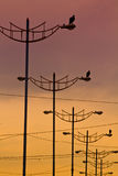 Birds standing on light posts during sunset. Manabi, Ecuador Stock Photo