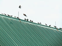 Birds standing in a row on the roof, pigeons often live together in a group. Birds standing in a row on the roof against the sky, pigeons often live together in Royalty Free Stock Photography