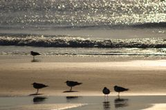 Birds standing in the sunset royalty free stock images