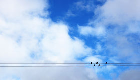 Birds standing on wires. With sky and clouds background Royalty Free Stock Images