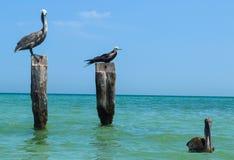 Birds staring Stock Photography