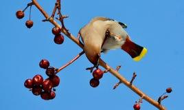Birds of the steppes Stock Photos