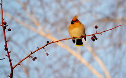Birds of the steppes Royalty Free Stock Photos