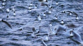 Birds in Stockholm. Sweden in spring stock video footage