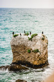 Birds on the stone Royalty Free Stock Photography