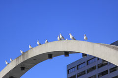 Birds on structure Stock Images