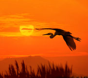 Birds and sun Royalty Free Stock Images