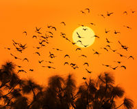 Birds and sun Royalty Free Stock Image