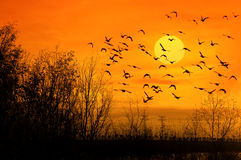 Birds and sun Royalty Free Stock Photos