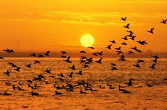 Birds and sun. Birds playing in the sunset .Birds and sun Stock Image