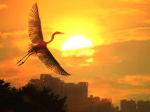 Birds and sun. Heron  playing in the sunset Royalty Free Stock Images