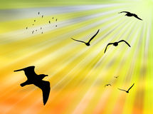 Birds in the sun Stock Images