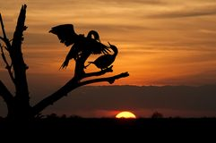 Birds at sundown Royalty Free Stock Images