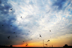Birds and the sunrise stock images