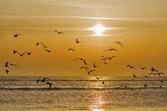 Birds at sunrise. Sunrise over a ocean with a flying birds Stock Images