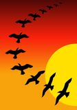 Birds on sunset. Beautiful illustrated image of colourful sunset background with birds royalty free illustration