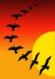 Birds on sunset. Beautiful illustrated image of colourful sunset background with birds Stock Photography