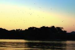 Birds at sunset Royalty Free Stock Image