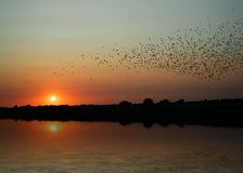 Birds at sunset. Sunset on river Yar, Norfolk, England Royalty Free Stock Photography