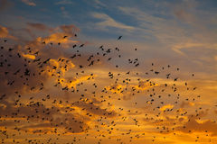 Birds in the sunset Royalty Free Stock Photo
