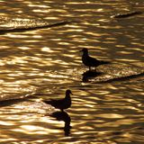 Birds and sunset Royalty Free Stock Photography