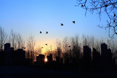 Birds and sunset. In city Royalty Free Stock Photography