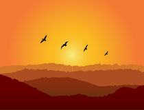 Birds at Sunset. Birds flying as the sun sets Royalty Free Stock Image