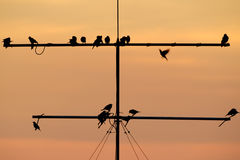 Birds at sunset Royalty Free Stock Photo