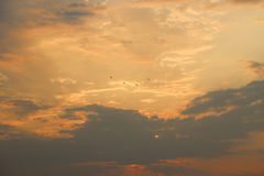 Birds with sunset Royalty Free Stock Photos