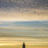 Birds sunset orange sky dome royalty free stock image