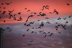Birds on sunset Royalty Free Stock Images