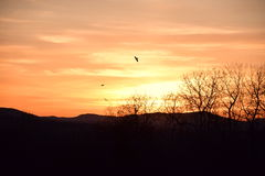 Birds in the Sunset. Silhouette of three birds in the distance flying into the sunset Royalty Free Stock Photos