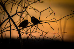 Birds at sunset. Royalty Free Stock Photos