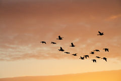 Birds in Sunset Sky Stock Images