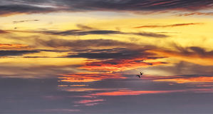 Birds in the sunset sky Royalty Free Stock Photos